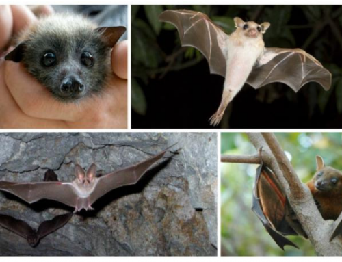 Rabies, Wildlife and how to protect your Family