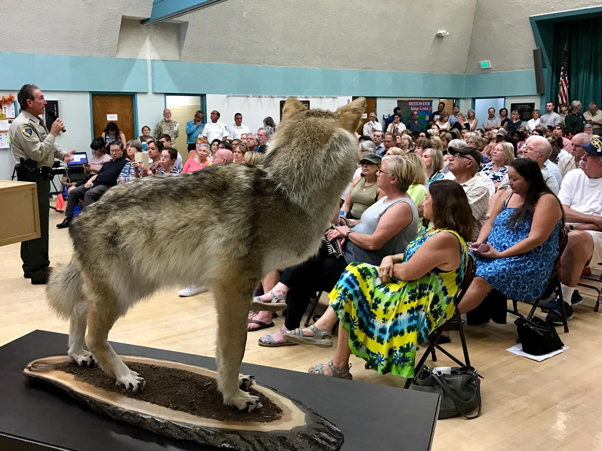 Neighborhood Council of Westchester/Playa Wildlife Watch Group with Animal Services