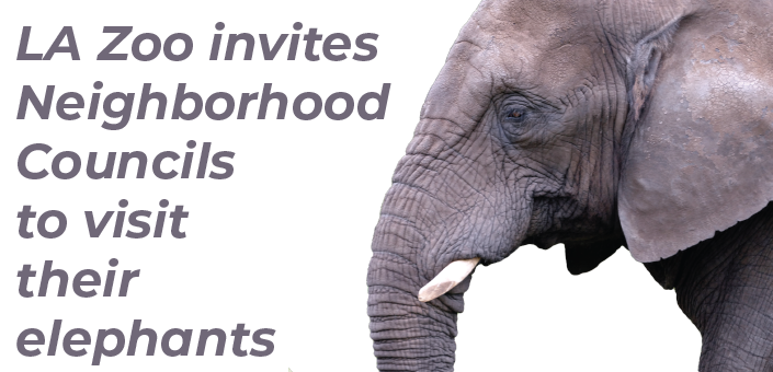 LA Zoo Invites Neighborhood Councils To Visit Their Elephants