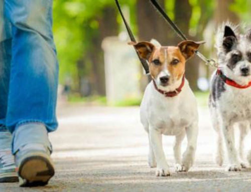 L.A. Animal Services: Important Pet Laws for Every Dog Owner to Follow