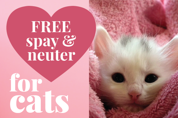 Free spay & neuter for Los Angeles cats May 1-31 via LA Animal Services