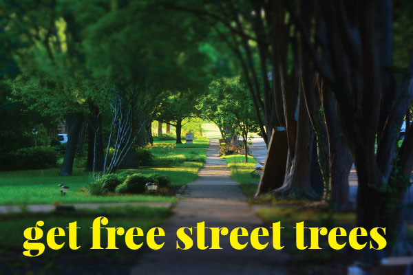 photo of a shady tree lined street - graphic for LA Sanitation street tree giveaway program