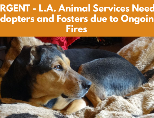 URGENT – L.A. Animal Services Needs Adopters and Fosters due to Ongoing Fires
