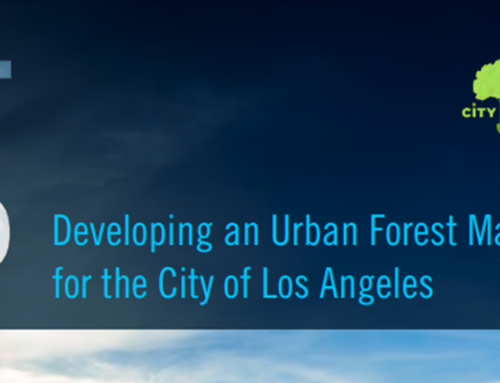Updates on Developing LA's Urban Forest Management Plan