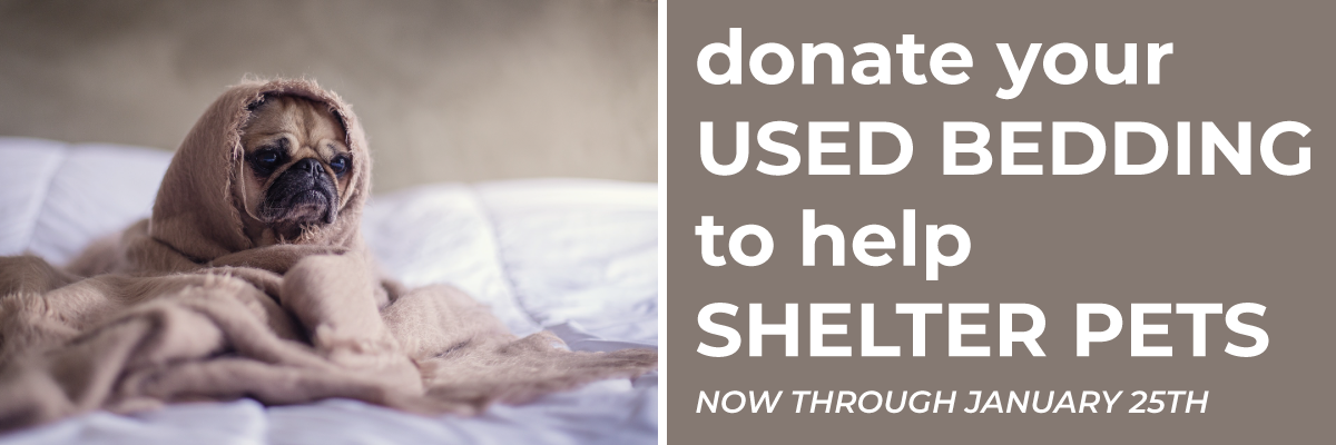 Donate Your Used Bedding To Help, Where To Donate Used Bedding And Towels