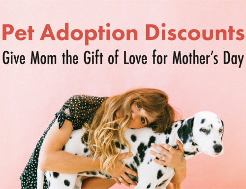 Give Mom the Gift of Love for Mothers Day With Pet Adoption Discounts This Weekend