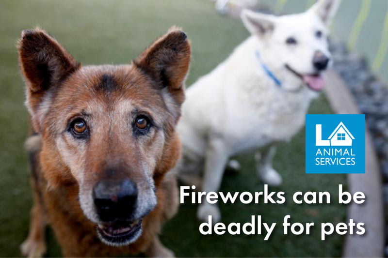 Fireworks can be deadly for pets