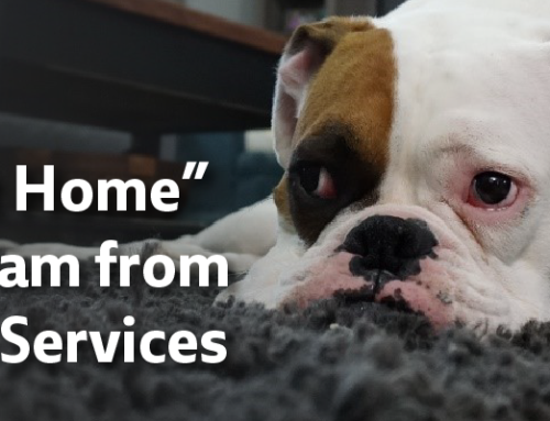 "New ""Shelter At Home"" program from LA Animal Services lets you care for found pets at home"